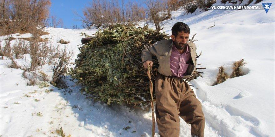 Şemdinli'de hayvanları için karlı tepelerden ot taşıyorlar