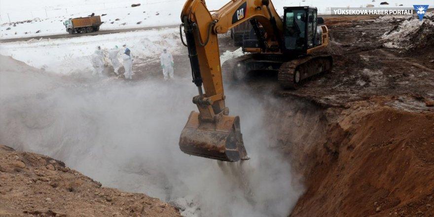 Başkale'de depremde telef olan hayvanlar kireçlenerek gömülüyor