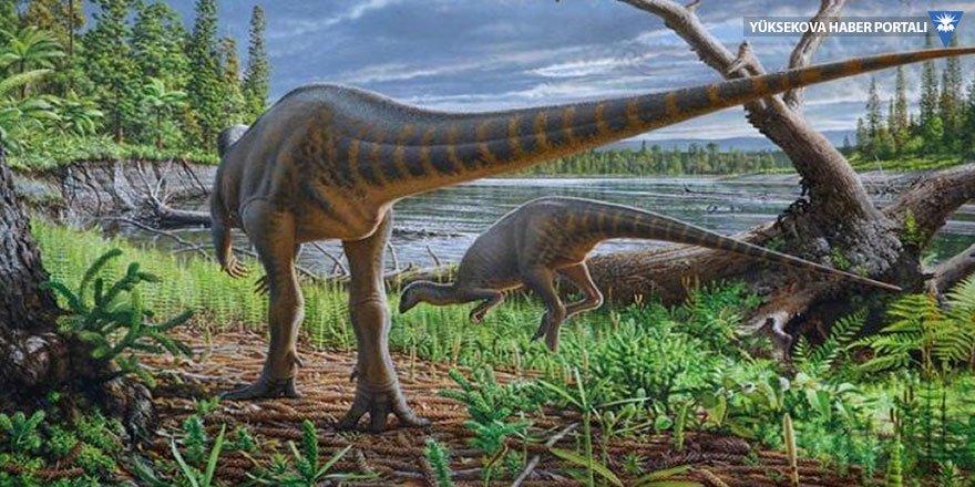 Dinozorların bir yılı 372 günmüş