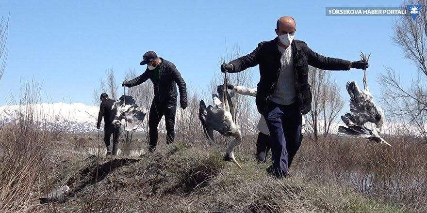 Yüksekova'da toplu kuş ölümleri