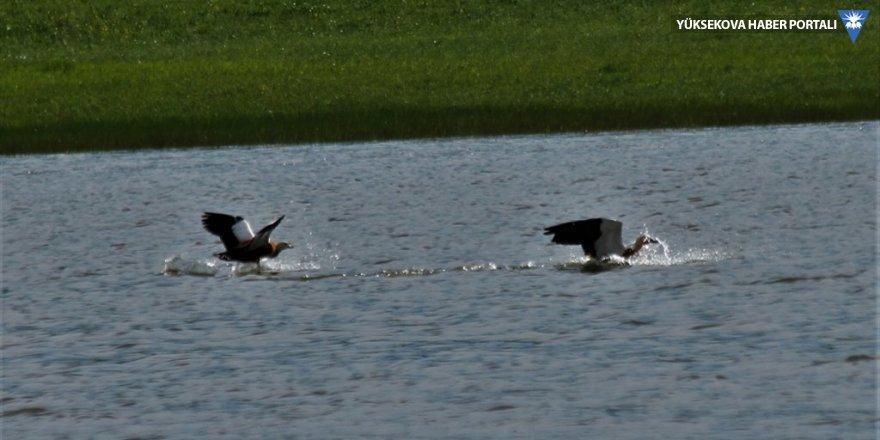 Van Gölü havzası havaların ısınmasıyla canlanmaya başladı
