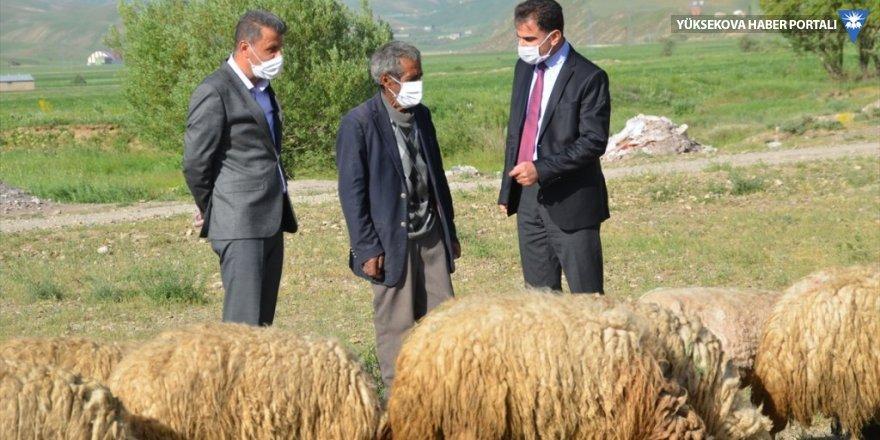 Yüksekova'da bataklığa saplanan ineğinin başından ayrılmayan besiciye koyun desteği