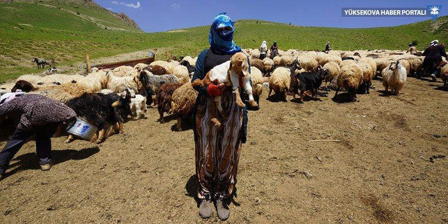 Ölen koyunları için göz yaşı döktü: 18 kişilik ailemizin tek geçim kaynağıydı