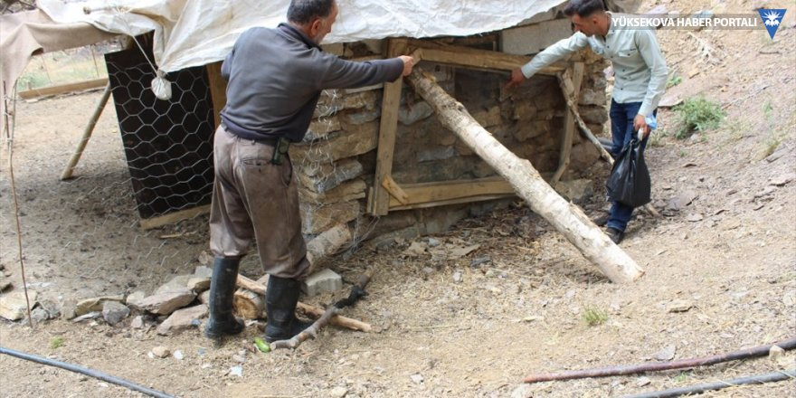 Şemdinli'de kümese giren köpekler 72 tavuğu telef etti