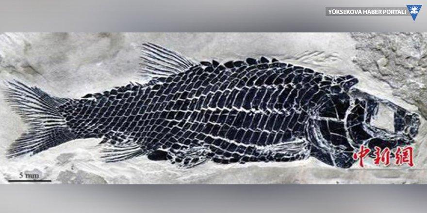 244 milyon yıllık balık fosili bulundu