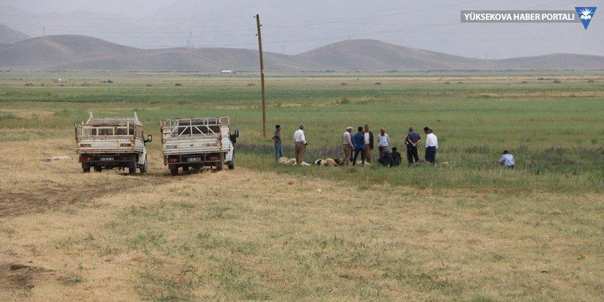 Yüksekova'da yıldırım can aldı: 1 kişi öldü, 19 koyun telef oldu