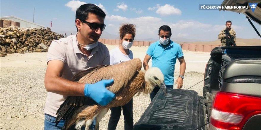 Yüksekova'da tedavisi tamamlanan kızıl akbaba doğaya salındı