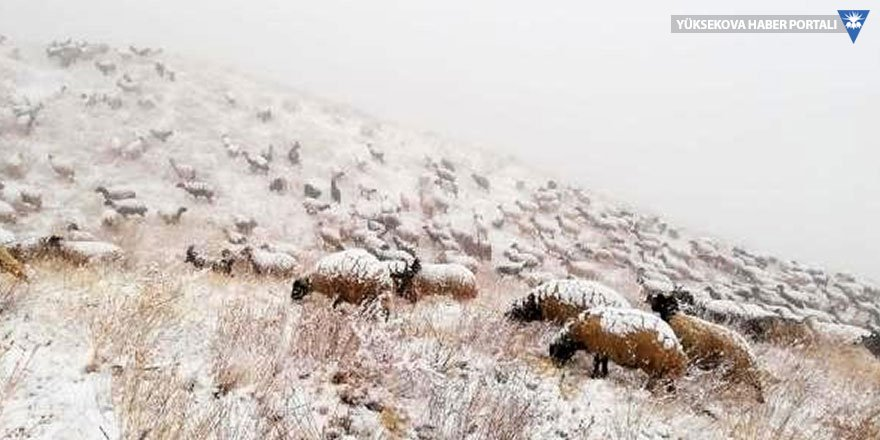 Koyunlarıyla birlikte yayladan dönerken kara yakalanan çoban yardım istedi