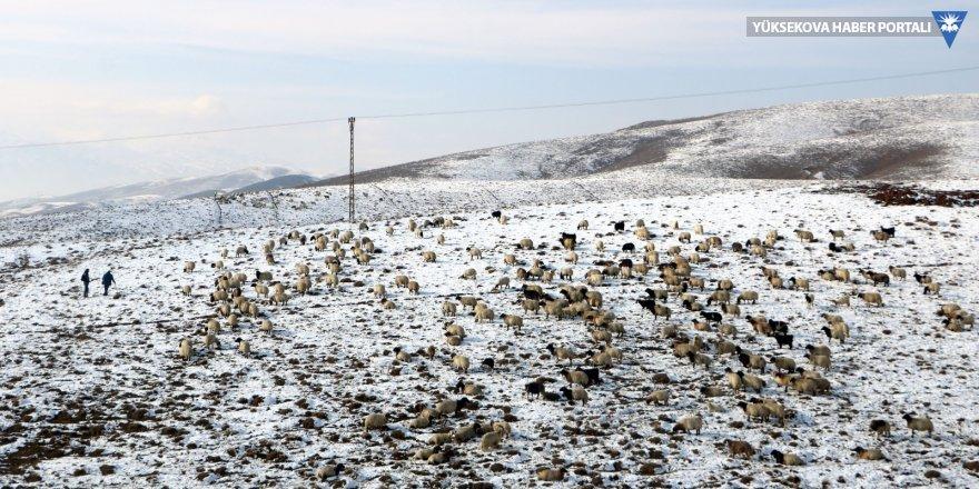 Yüksekova'da kar yağışı bazı besicileri hazırlıksız yakaladı