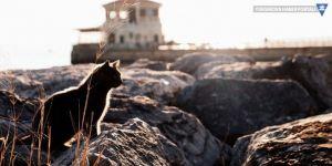 ABD'de 'seri kedi katiline' 16 yıl hapis cezası