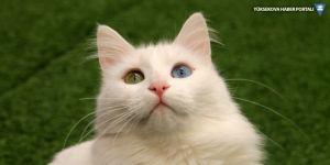 Türkiye'de 15 milyon kişi evini kedilerle paylaşıyor