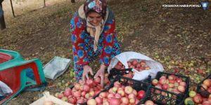 Beytüşşebap'ta elma hasadı başladı