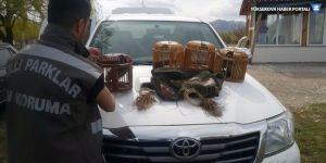 Van'da kafes avcılarına operasyon