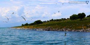 Van'ın Adır Adası eşsiz dokusuyla büyülüyor