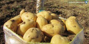 Suriye'den ithal edilen patateste 'kimyasal' şüphesi