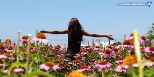 Van Gölü kıyısında renk cümbüşü