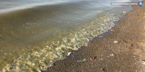 Van Gölü'nde artan kirliliğe tepki