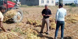 Tatvan'da kuru fasulye hasadı başladı
