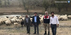 Van'da çobanın ellerini bağlayarak 135 hayvanı çaldılar