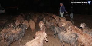 Sel 120 hayvanı telef etti