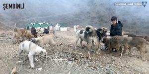 Şemdinli'de görev yapan hayvansever öğretmenden örnek davranış