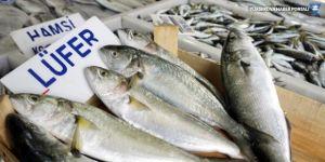 Balıkçılardan çağrı: Hamsiye de tanzim isteriz