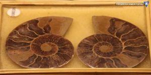 460 milyon yıllık deniz kabuğu!