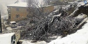 Şemdinli'de kar yağışı ve heyelan: Ağaçlar devrildi