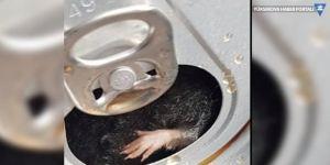 Fransa'da kola kutusundan fare çıktı