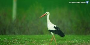 Bismil'in müdavim kuşları gelmeye başladı