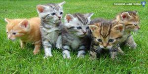 3 bin yavru kediyi öldüren araştırma durduruldu