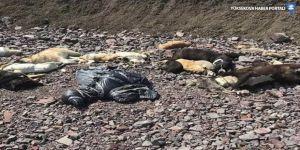 Ankara'da boş arazide onlarca köpeğin cesedi bulundu