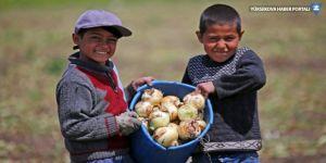 TÜİK: Çocuk işçi sayısı arttı!