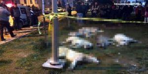 'Köpek katliamı' davasında belediye müşteki sıfatıyla çağrıldı
