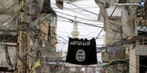 IŞİD bomba yüklü iki inekle saldırdı