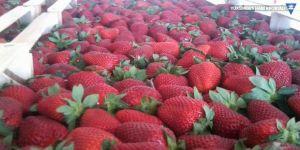 Meyve sebze üretimi kayıt altına alınıyor