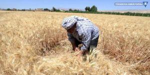 Esad'la Kürtler arasında buğday gerilimi
