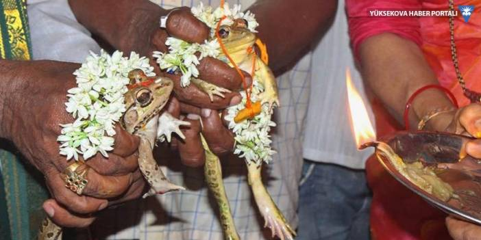 50 derecede kavrulan Hindistan'da yağmur duasına çıkıp kurbağa evlendirdiler