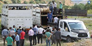 Hakkari'de 47 çiftçiye 987 küçükbaş hayvan dağıtıldı
