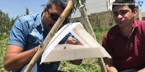 Yüksekova: Zararlı böceklere karşı feromon tuzağı