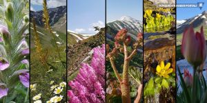Bingöl yaylalarında bahar