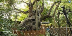 9 bin 369 ağaç tescillendi