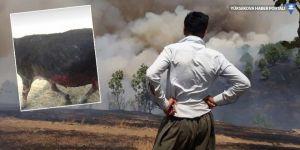 Şemdinli'de top atışı sonrası yangın: 30 koyun telef oldu!