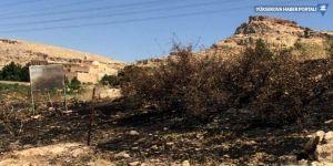 Manastıra ait zeytin ağaçları yandı
