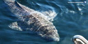Hayatta olan en yaşlı canlı: 512 yaşında