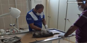 Hakkari'de aracın çarptığı kedi tedavi altına alındı