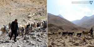 Yayladan koyunlarla zorlu yolculuk başladı