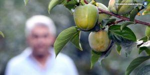 Hakkari'de ılıman iklim meyveleri yetiştiriliyor