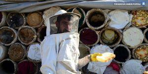 3 bin rakımlı yaylalarda karakovan balı hasadı başladı
