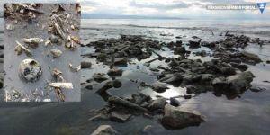 Van Gölü kıyısına kemikler vurdu